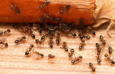 Productos para Control de insectos con formula líquida en Panamá
