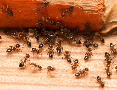 Insecticida con formula líquida en Panamá