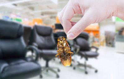 Gel para el control de hormigas y cucarachas en Panamá