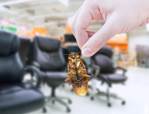 Gel para el control de hormigas y cucarachas