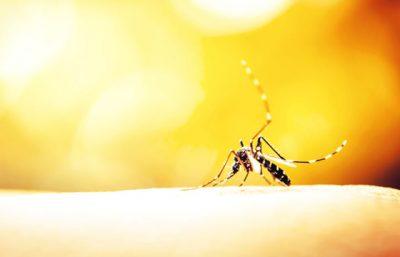 Trampas para insectos en Panamá