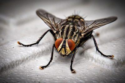 Insecticida granulado en Panamá