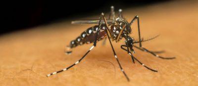 Trampa para mosquitos en Panamá