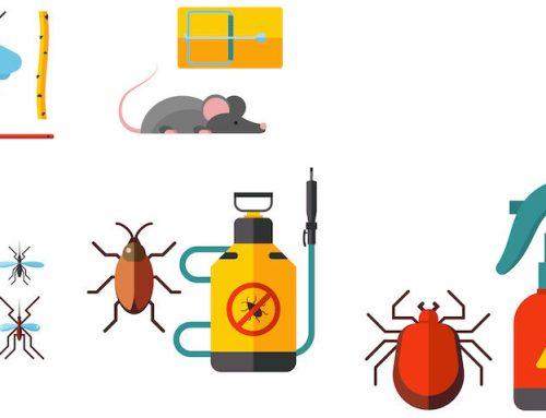 Metodos de control de plagas en Panamá (Parte 1)