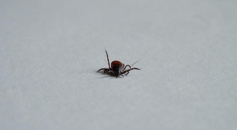 insecticidas para garrapatas en Panamá