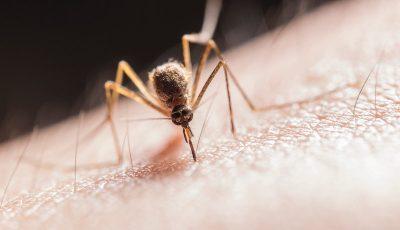 Insecticida para mosquitos en Panamá
