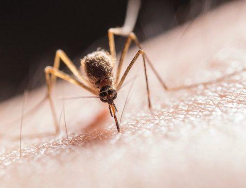 Insecticida para mosquitos